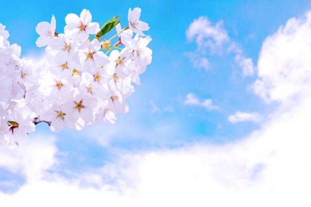時候の挨拶一覧【4月編】